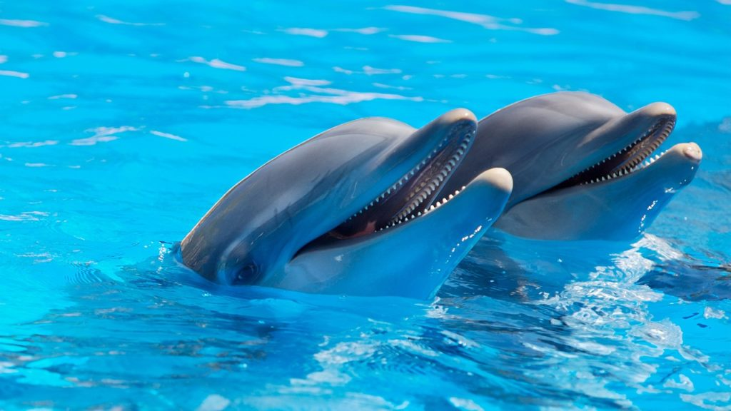 delfíni na floridě
