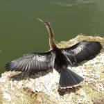 Národní park Everglades, Florida – pták