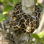 Národní park Everglades, Florida – had