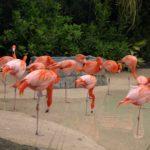 Národní park Everglades, Florida – plameňáci