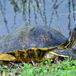 Národní park Everglades, Florida