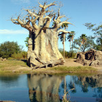 Disney Safari Orlando