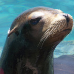 Lachtan v Orlando SeaWorld