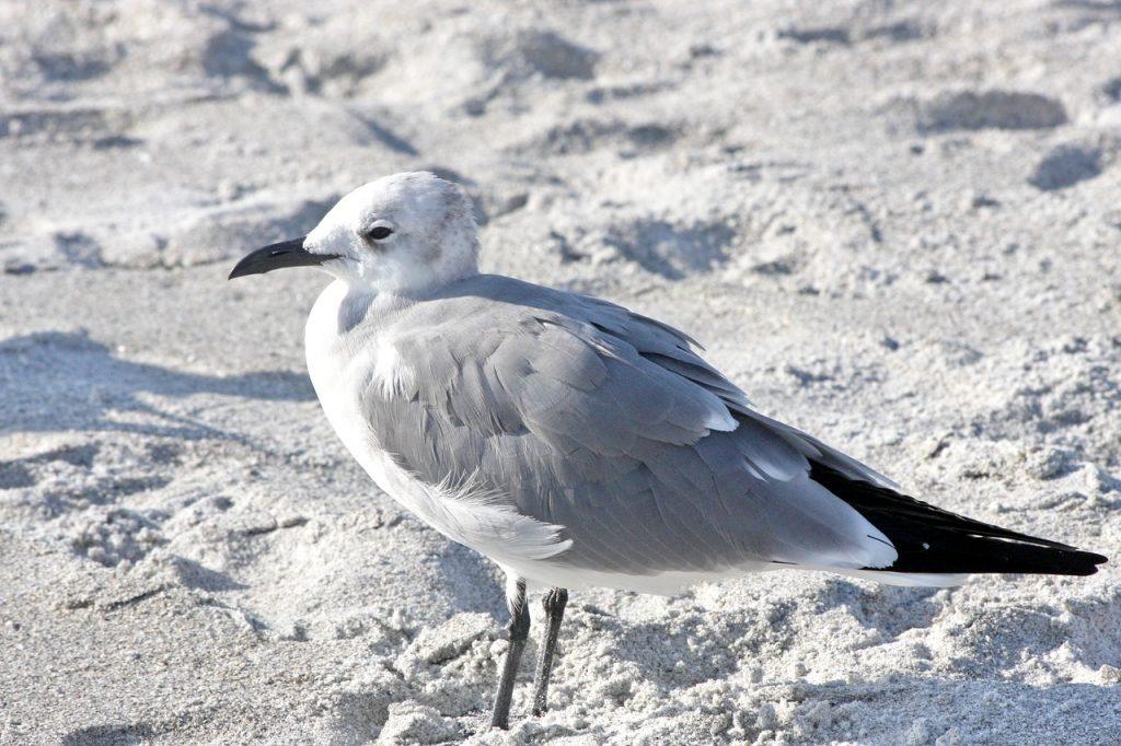 Sanibel Florida – pták na pláži