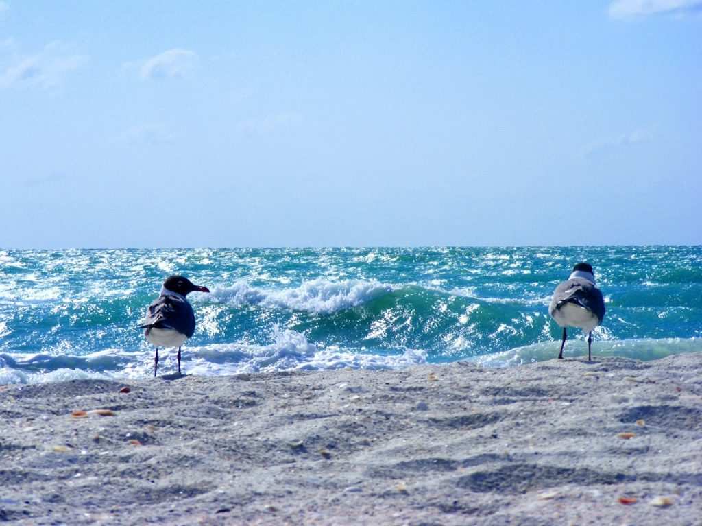 Sanibel Florida – oceán