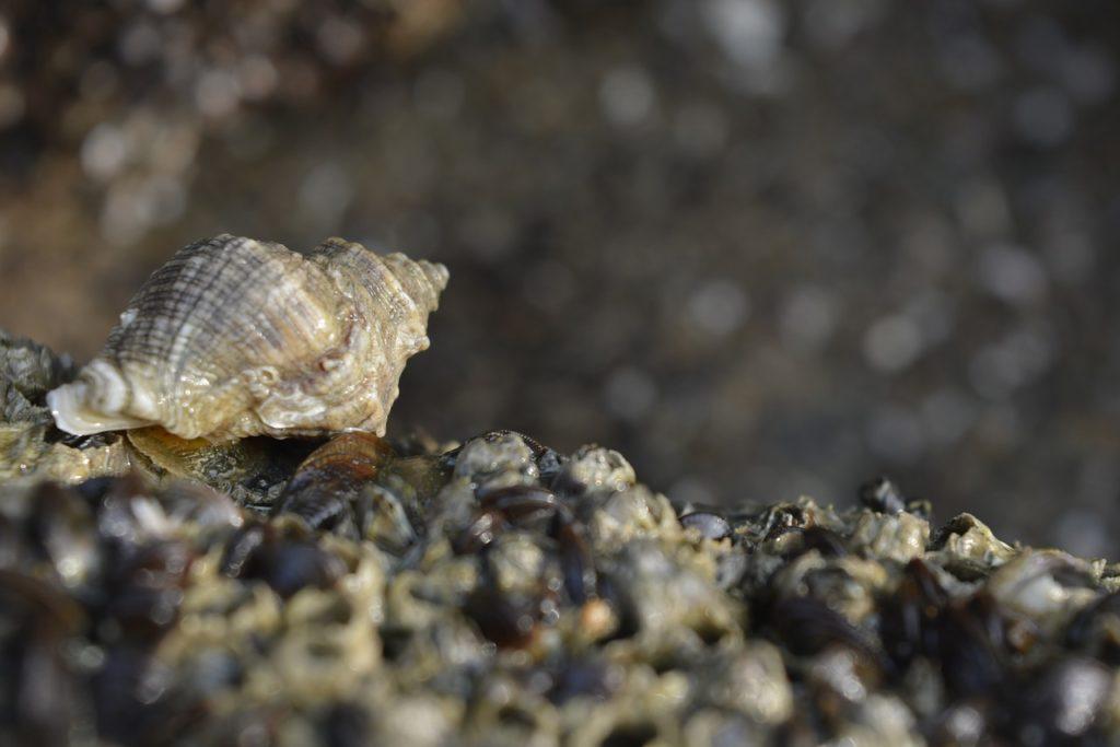 shell factory florida - mušle